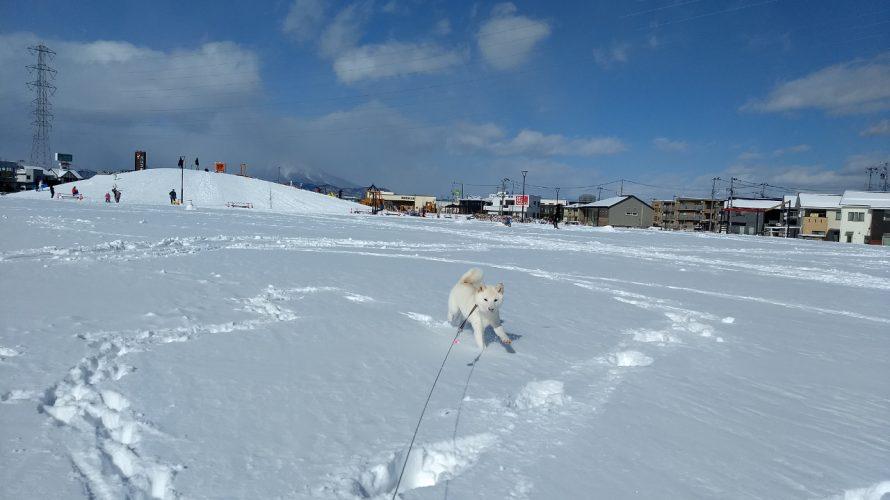 雪深い公園をお散歩