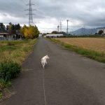 志波城古代公園をお散歩