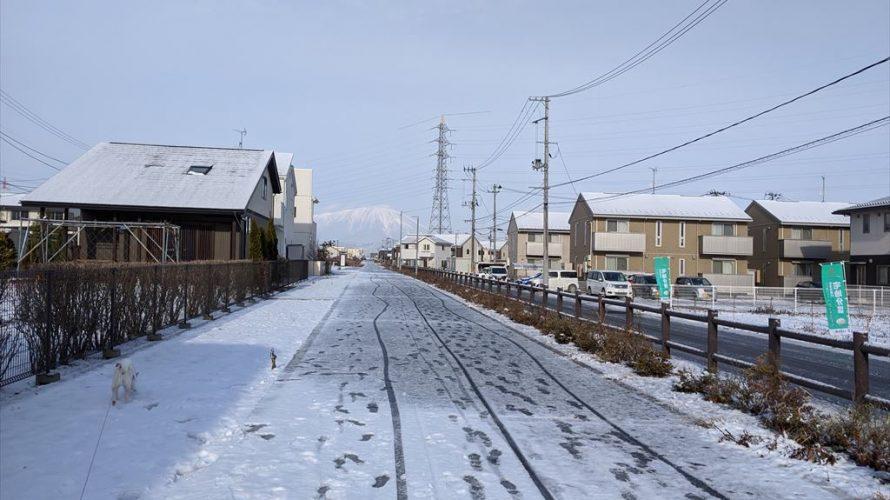 今日のお散歩(クリスマスバージョン)