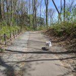 愛宕山記念公園をお散歩
