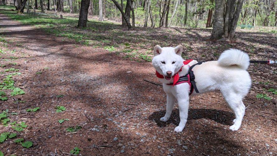 滝沢森林公園をお散歩