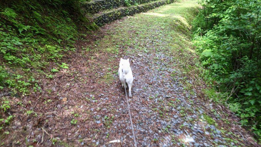 都南つどいの森のお散歩で野生動物に遭遇