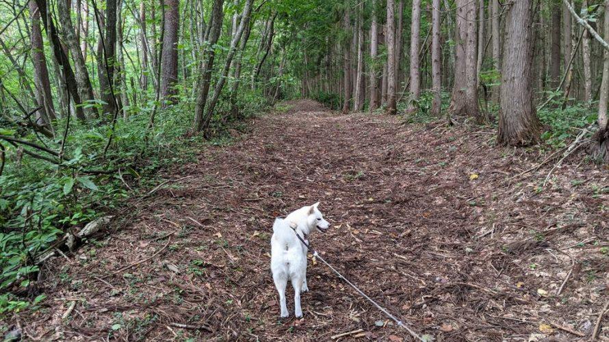 再び都南つどいの森へ